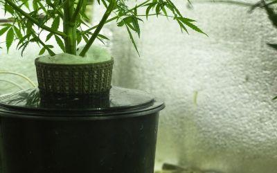 "Cannabis Irrigation is a ""Drip"""