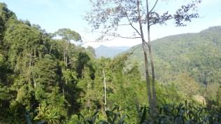 Chiangmai2_67