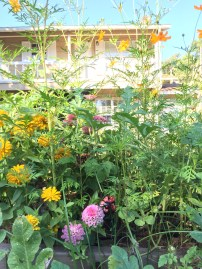 Zinnia, cosmos, watermelon, and whirligigs. Never complete without the whirligigs.