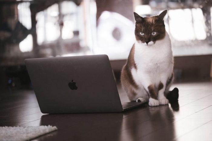 預金封鎖で悩む猫