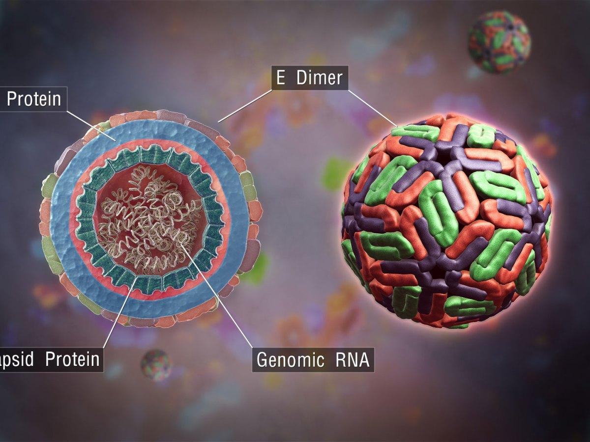 dengue virus - Takeda запустит масштабное испытание вакцины против денге