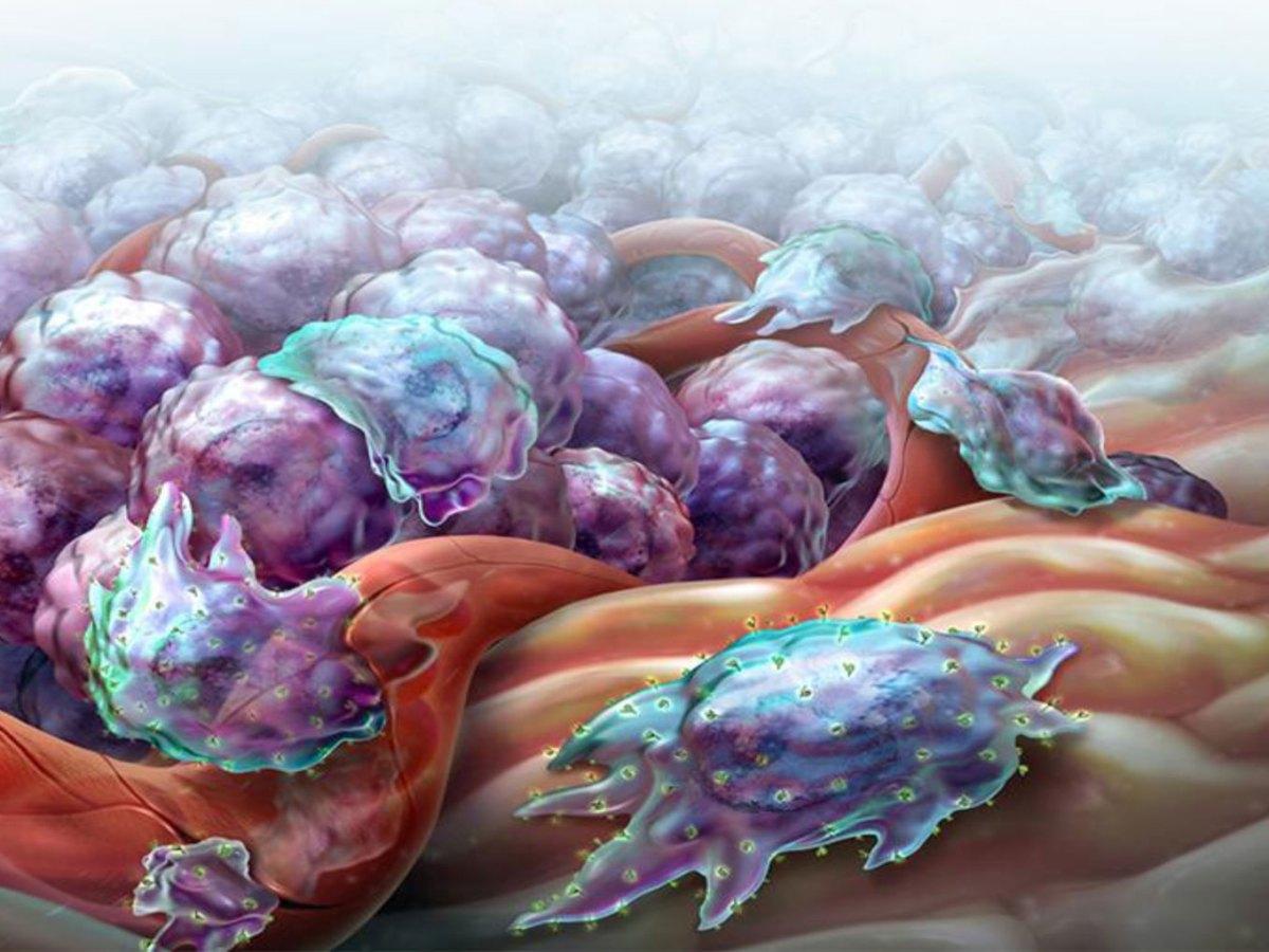immuno oncology - CD47 как новая мишень иммунотерапии раковых заболеваний