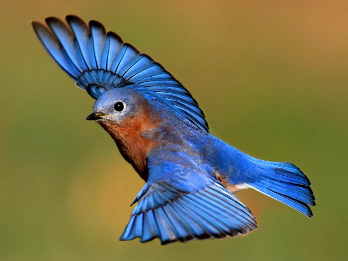Regeneron и Bluebird подружились на ниве иммуноонкологии