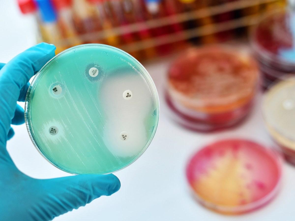 antimicrobial resistance - Великобритания покажет всему миру, как бороться с антибиотикорезистентностью