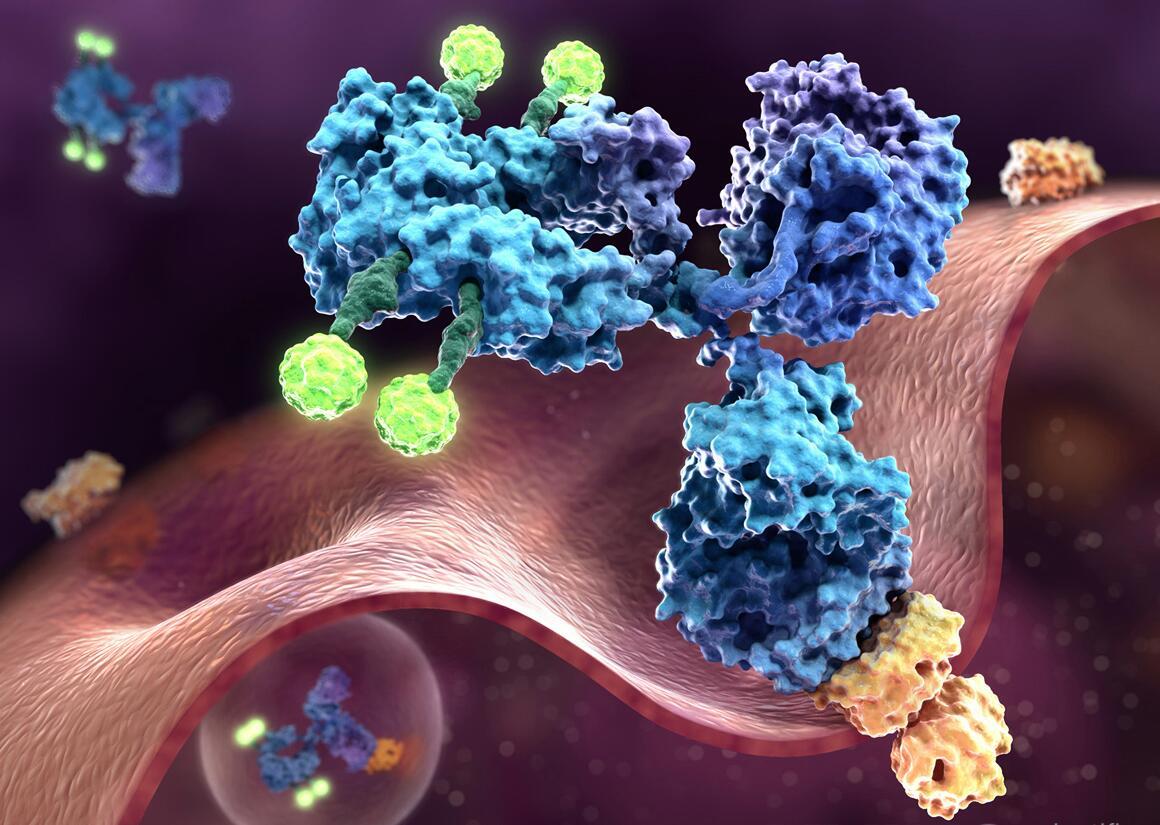 Энфортумаб ведотин против уротелиальной карциномы