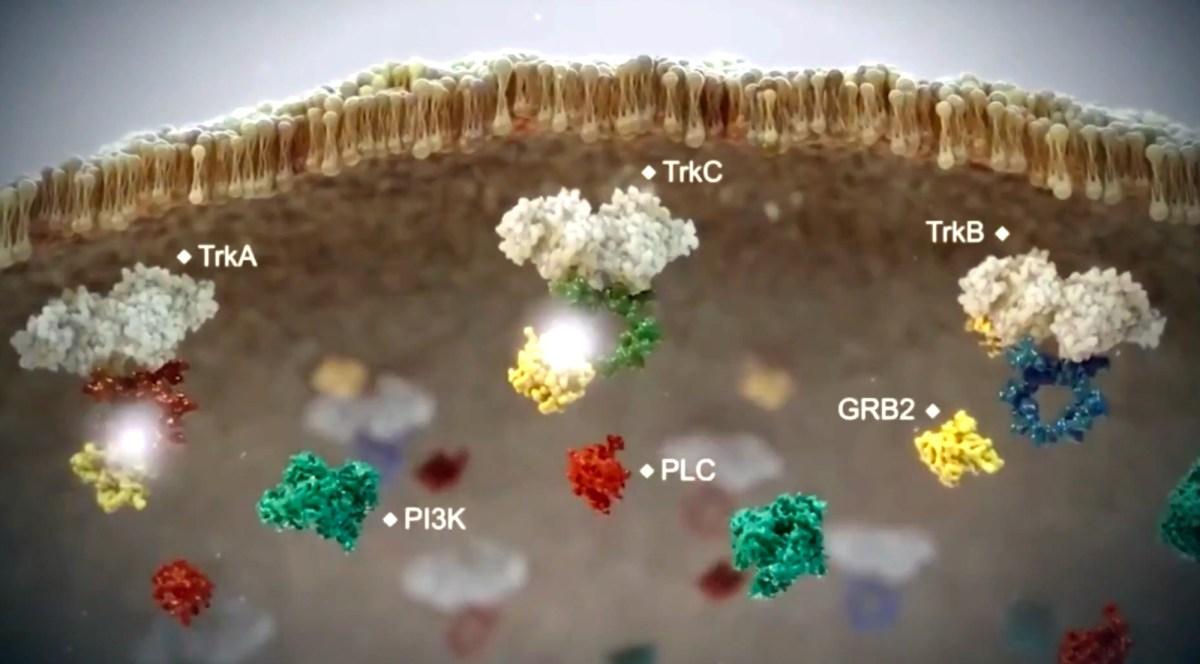 Энтректиниб: точечный удар по солидным опухолям