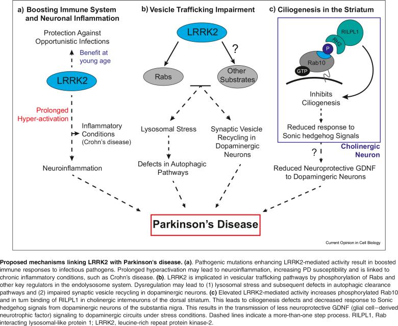 Denali и Biogen: уникальный подход к лечению болезни Паркинсона