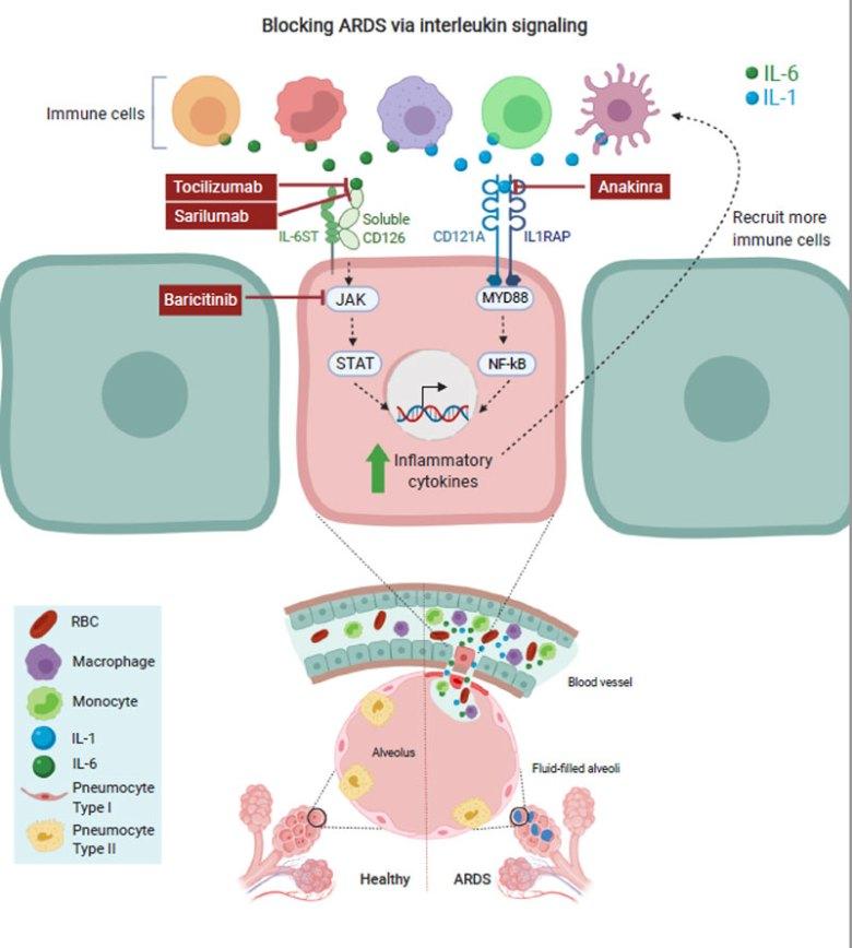 baricitinib covid 19 moa2 - Лечение коронавируса. Ремдесивир плюс барицитиниб — работающая комбинация против COVID-19