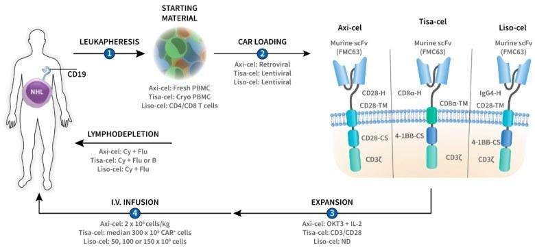 «Текартус»: новый CAR-T-препарат против мантийноклеточной лимфомы