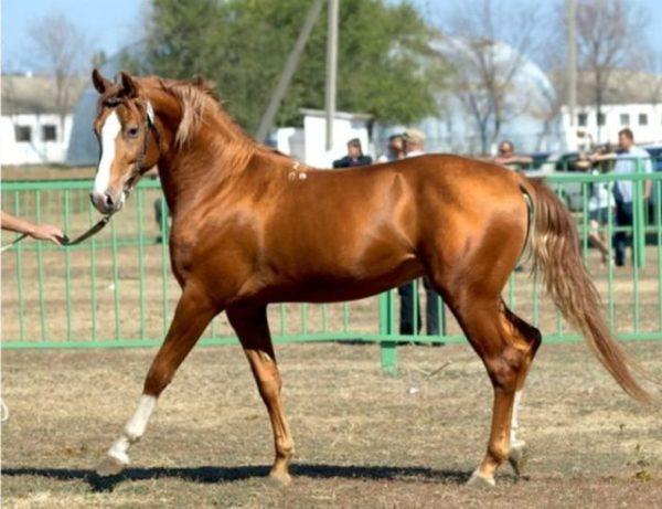 Клички для лошадей: красивые русские, арабские и ...