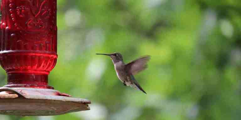 Where To Hang Hummingbird Feeder