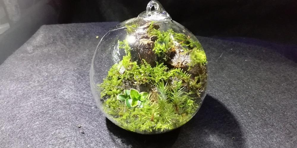 ガラス植木鉢の苔テラリウム