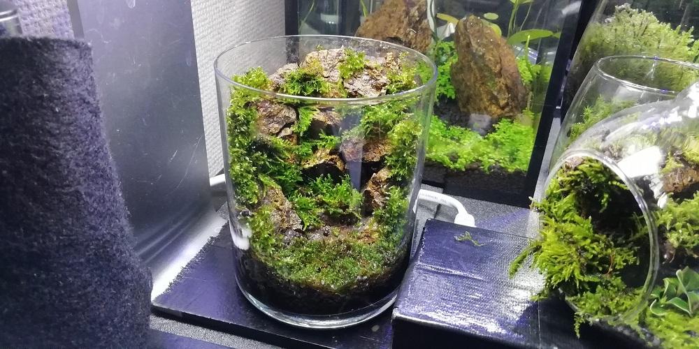 作成当初の枯れ滝のグラス苔テラリウム