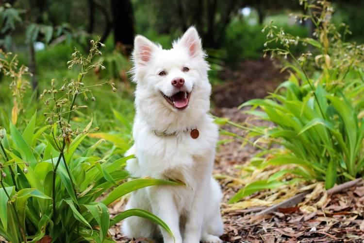 dod puppy photo