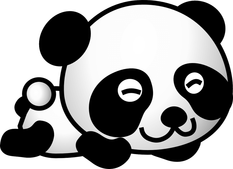 panda illustration