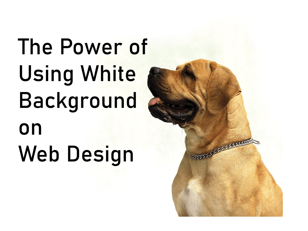 dog looking at white background