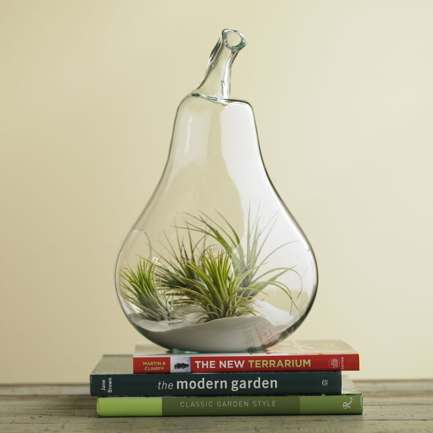 air-plant-terrariums-2