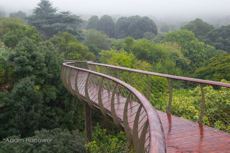 kirstenbosch-tree-canopy-walkway-cape-town-south-africa-2