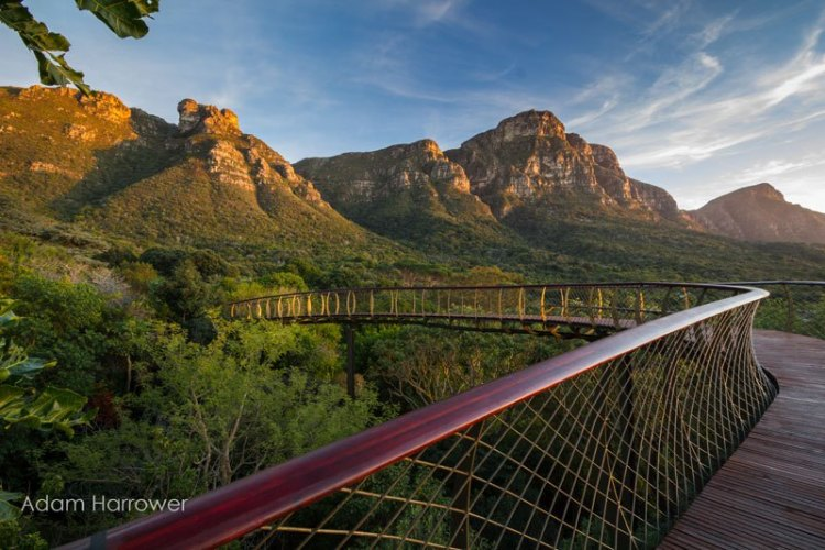 kirstenbosch-tree-canopy-walkway-cape-town-south-africa-7