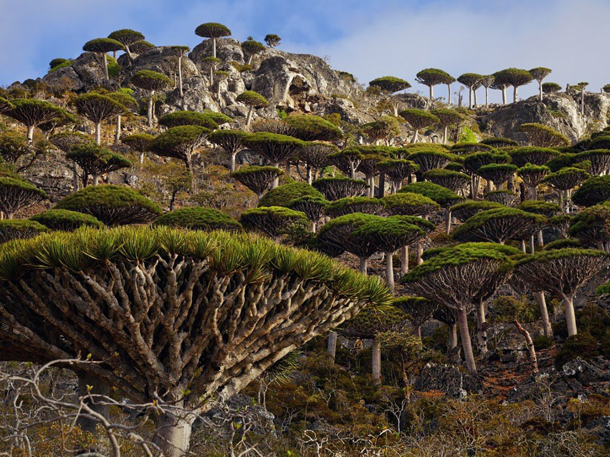 The Magic of Socotra