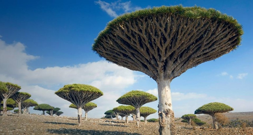 yemen-socotra-island