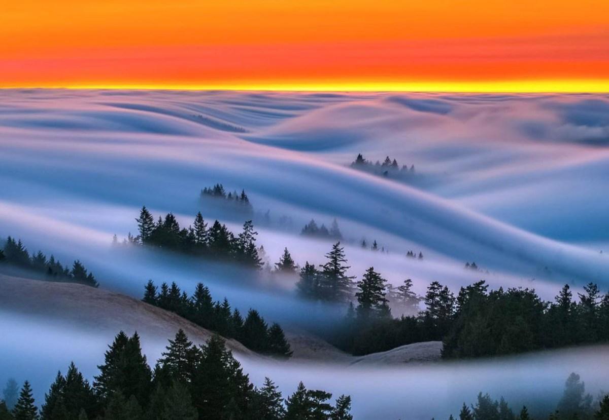 marin-fog-moss-and-fog