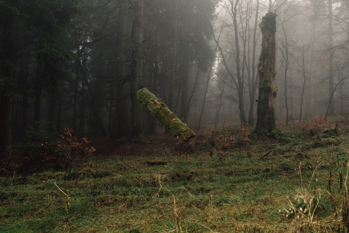 floating-forest-moss-and-fog-2