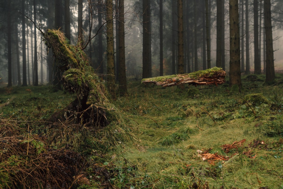 floating-forest-moss-and-fog-5