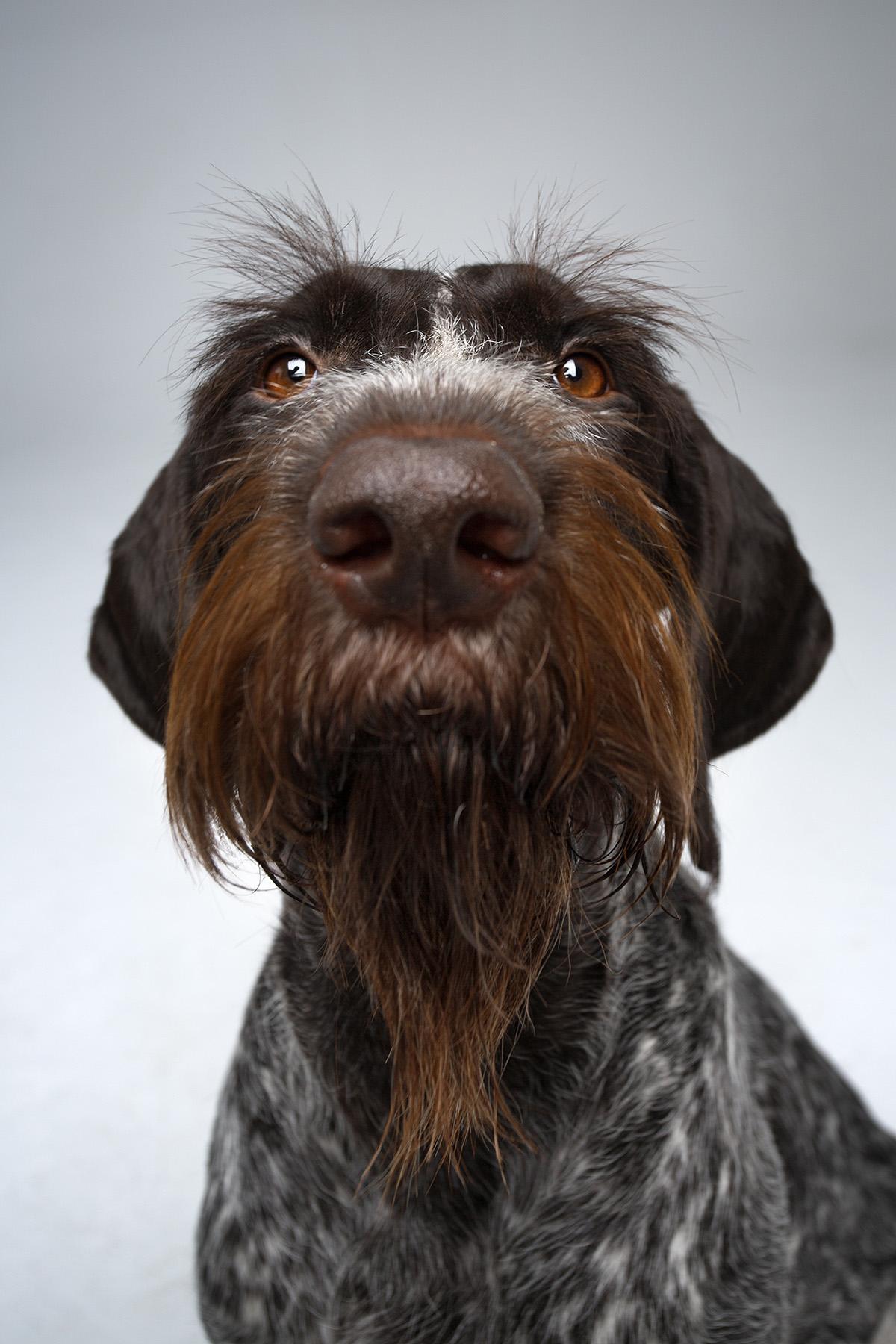 dog show moss and fog 6