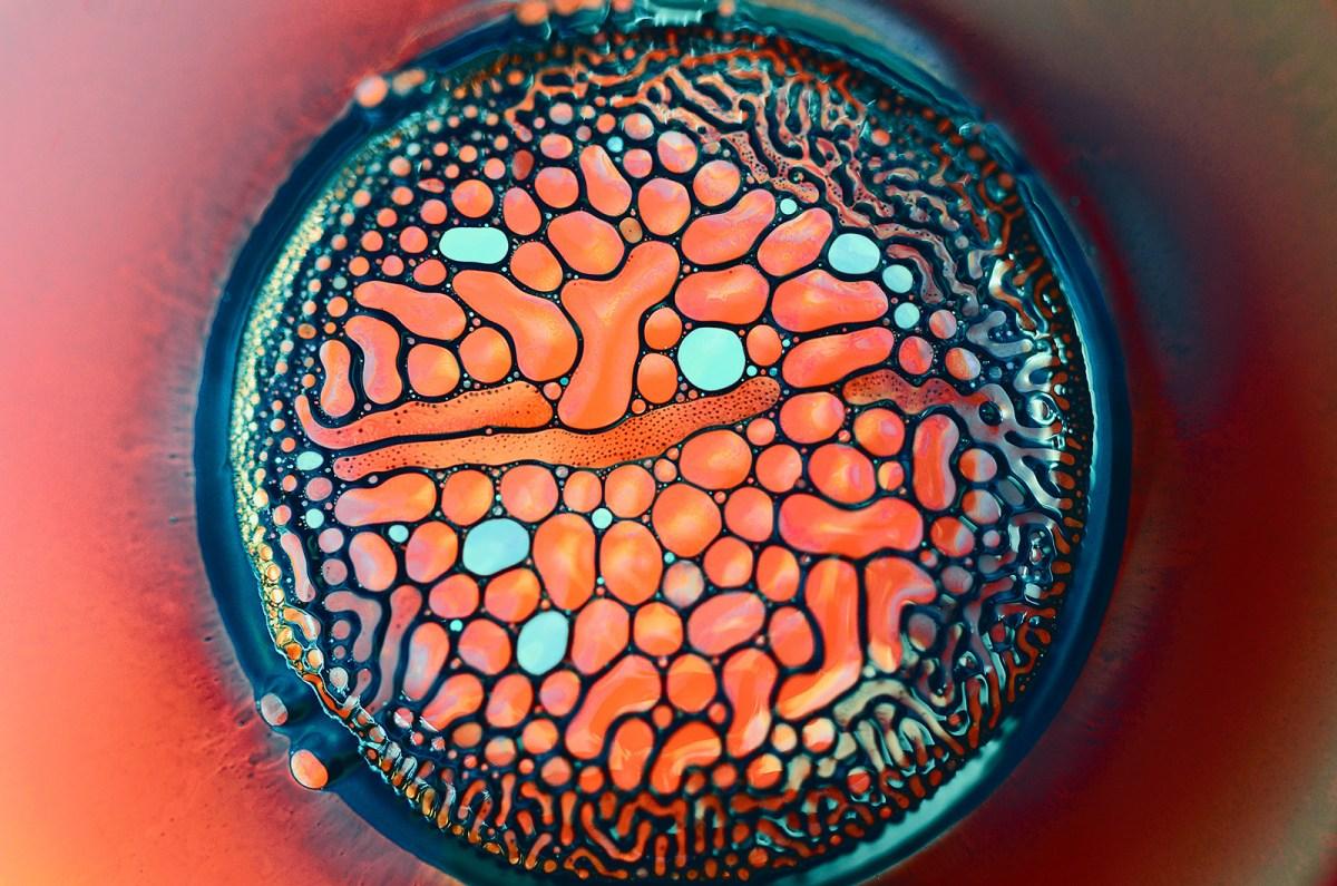 ferrofluid moss and fog 1