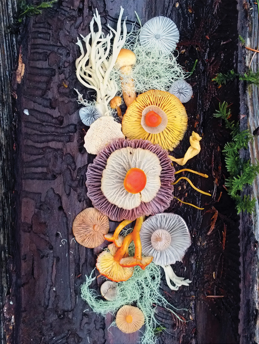 Wild Mushroom Menagerie moss and fog 6