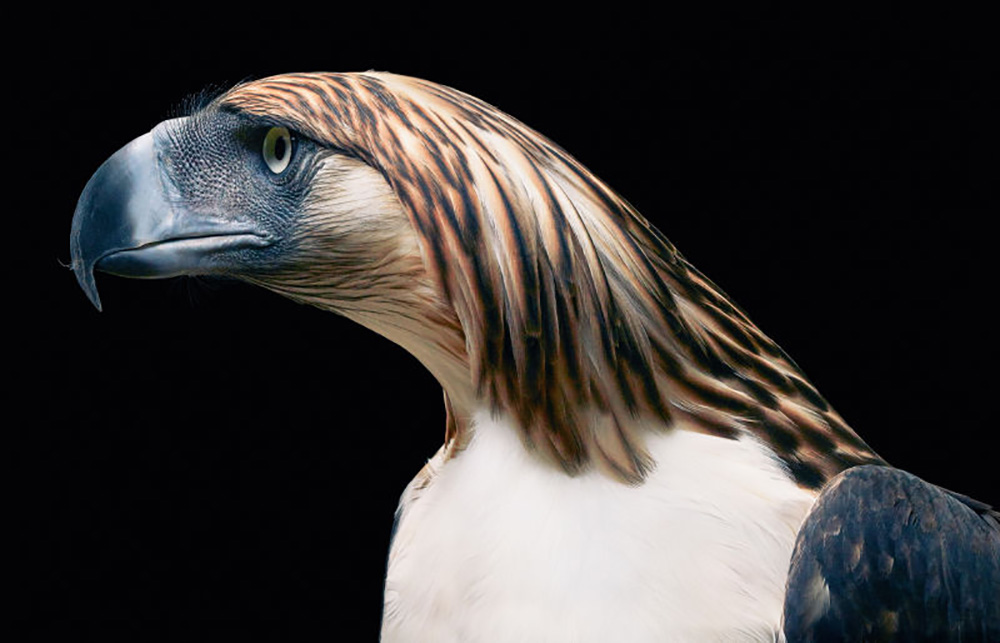 'Endangered' Book Showcases Amazing, Vulnerable Animals