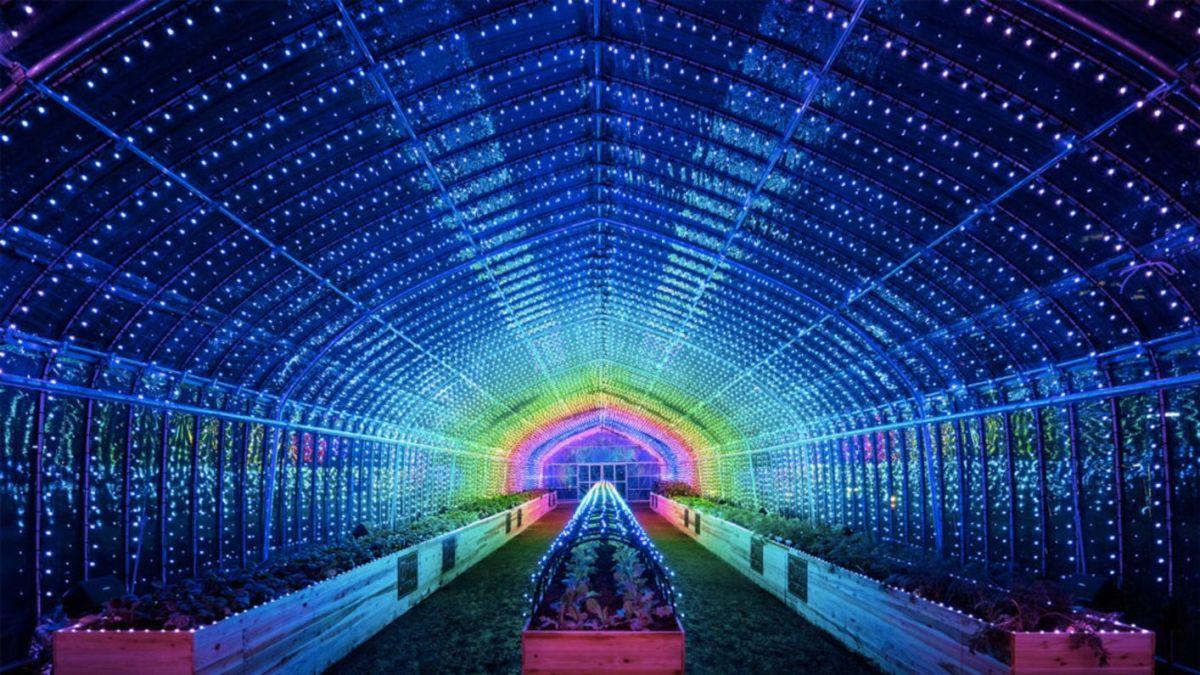 Tokyo's Digital Greenhouse