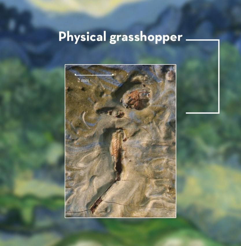 grasshopper-van-gogh-moss-and-fog-2