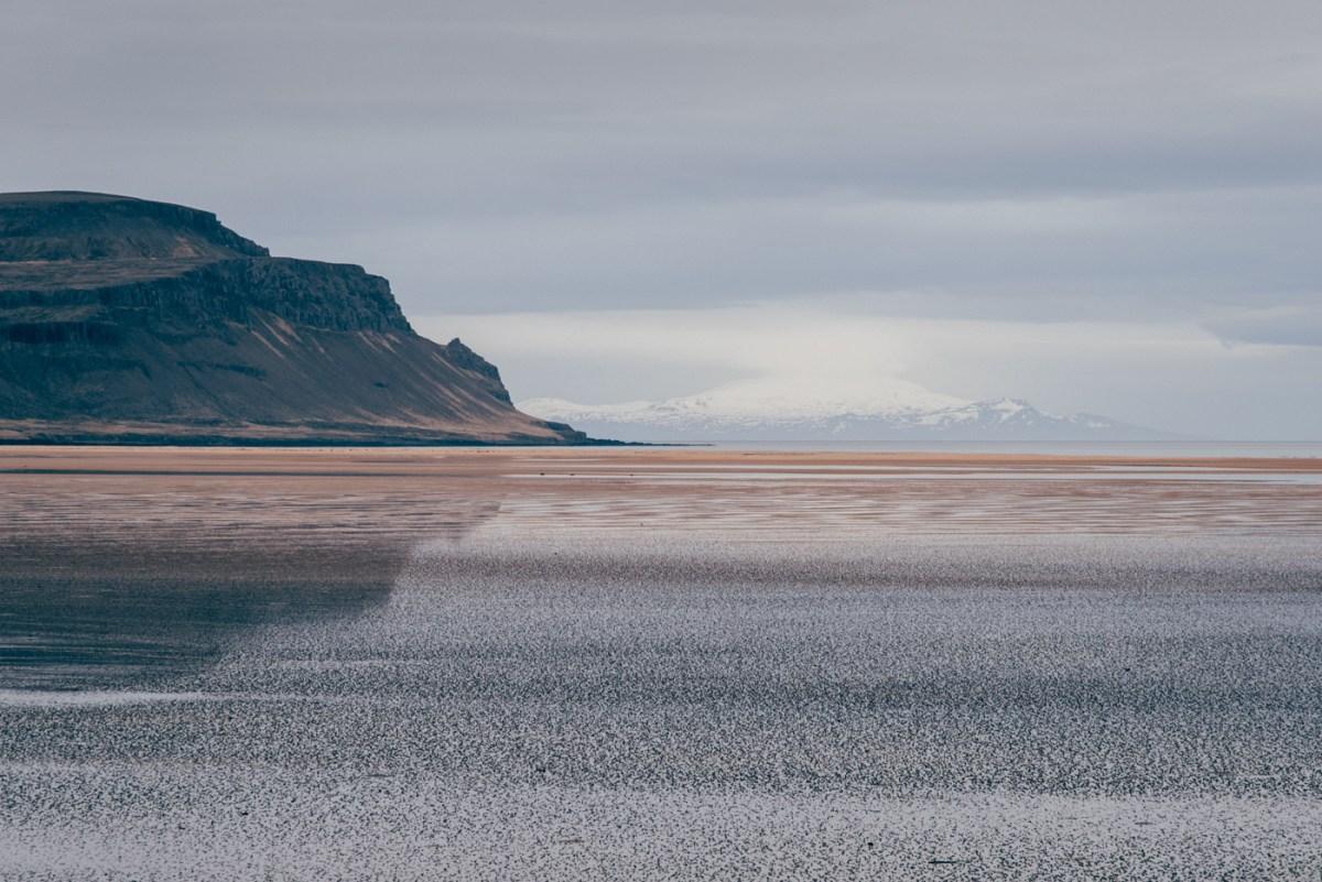 westfjords-iceland-moss-and-fog-6