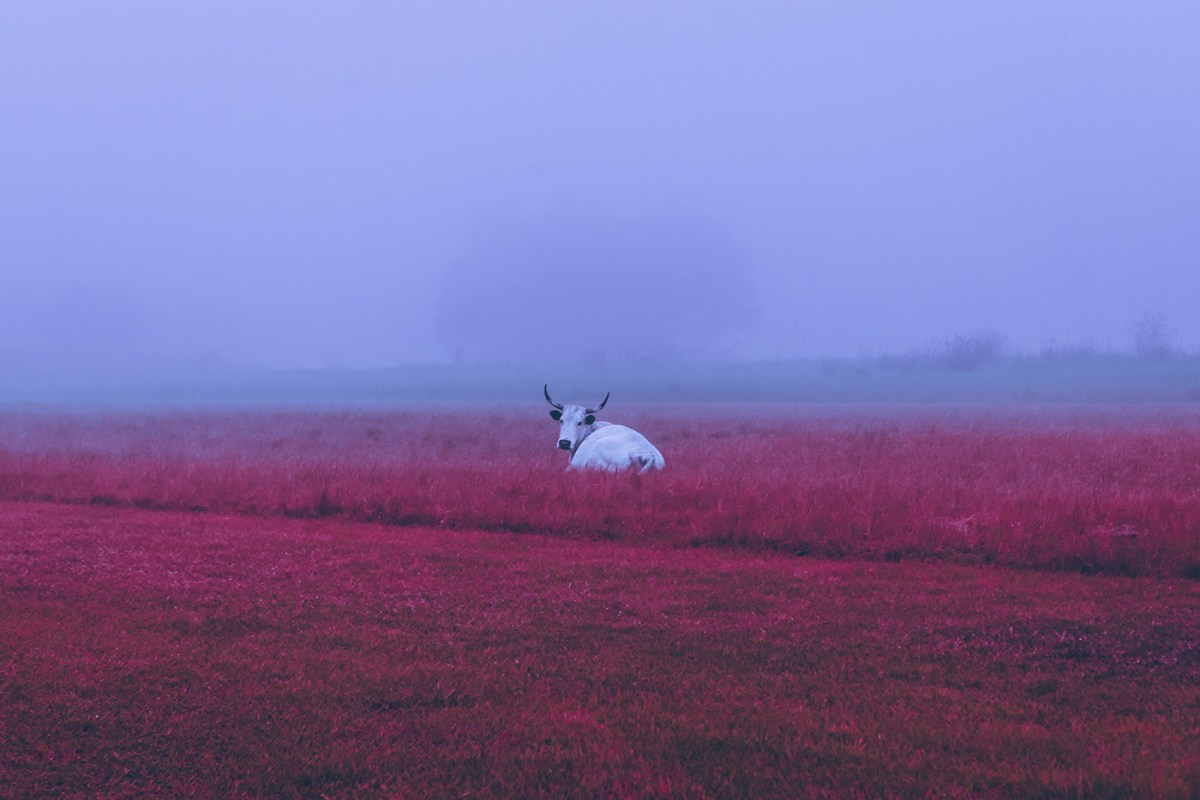 Morning-walks-south-africa-moss-and-fog-10
