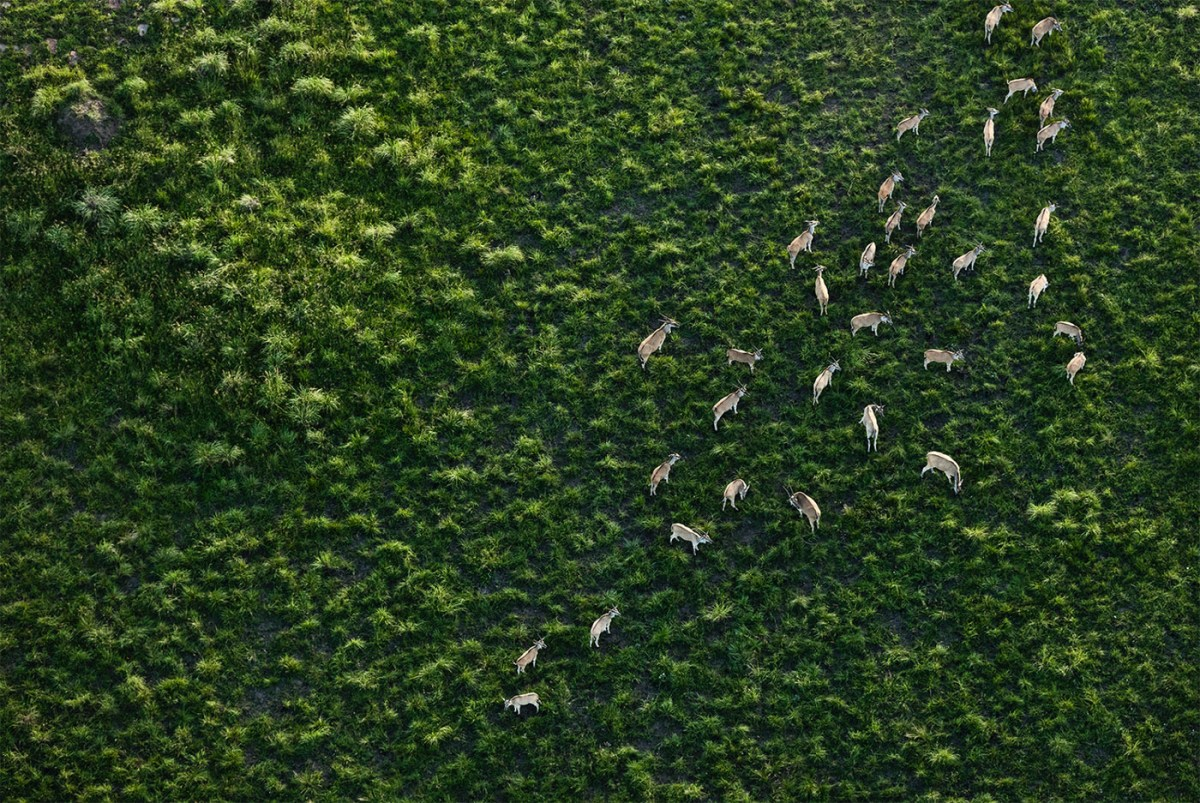 aerial-africa-moss-and-fog-3.5