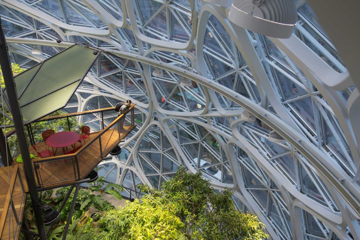 amazon-spheres-moss-and-fog-15