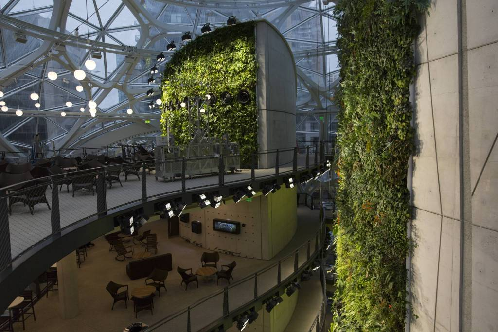 amazon-spheres-moss-and-fog-3