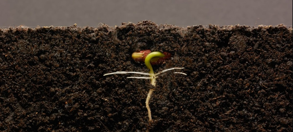 Kidney Bean Timelapse, Set to Classical