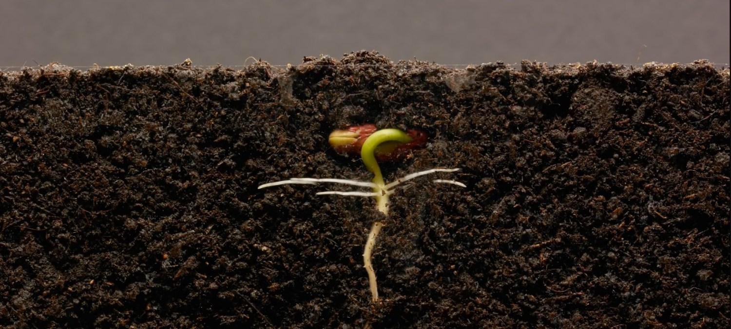 bean sprout time lapse - moss and fog