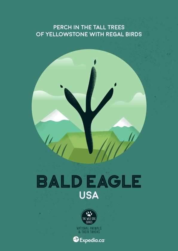 WildSideSeries__07_Eagle