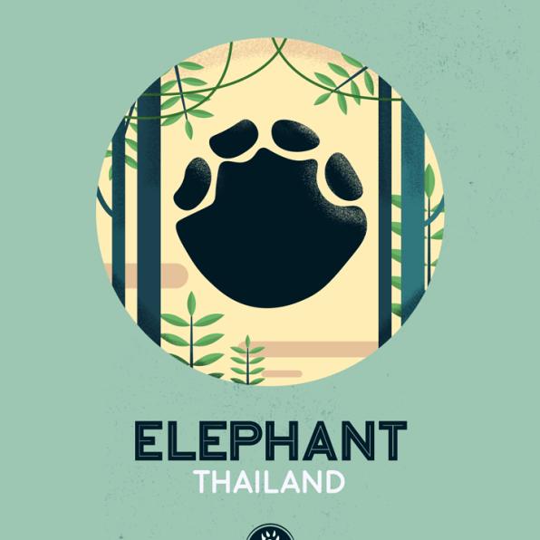 WildSideSeries__11_Elephant