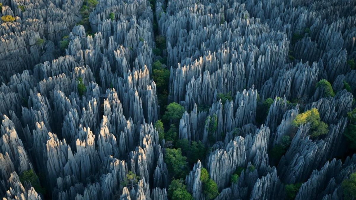 stone-forest-moss-and-fog-cover