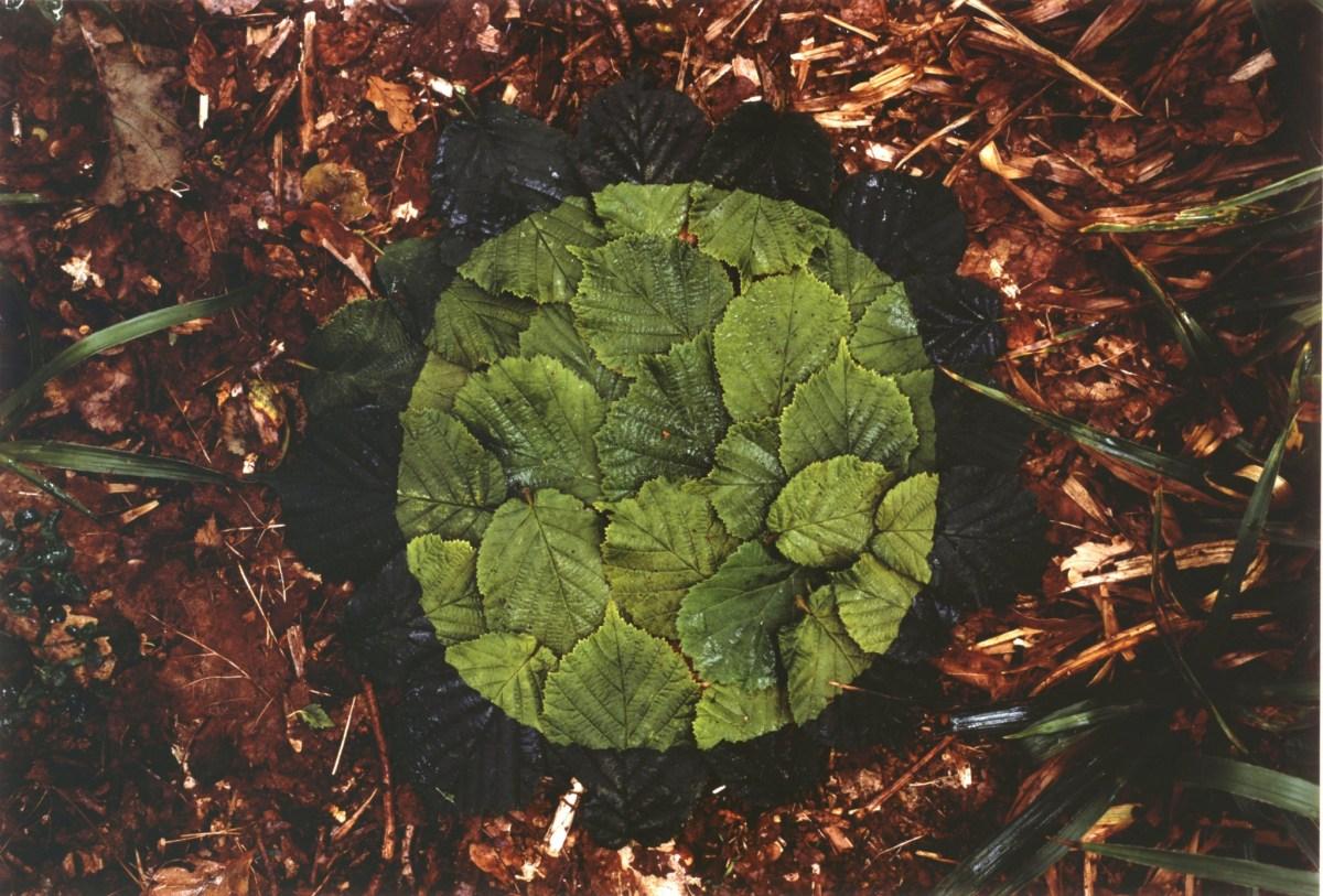 591-Goldsworthy-A-Hazel-Leaves-Two-Greens