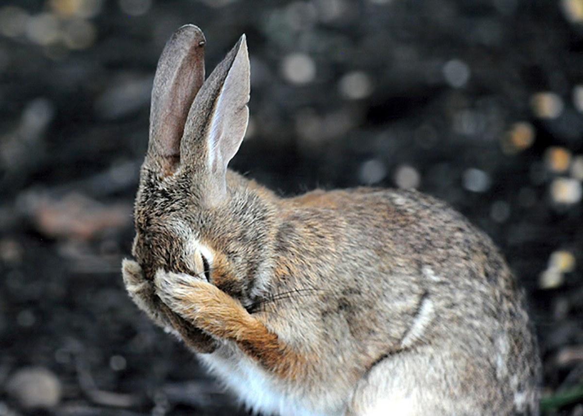 ComedyAwards_Daniel-Friend_Rabbit