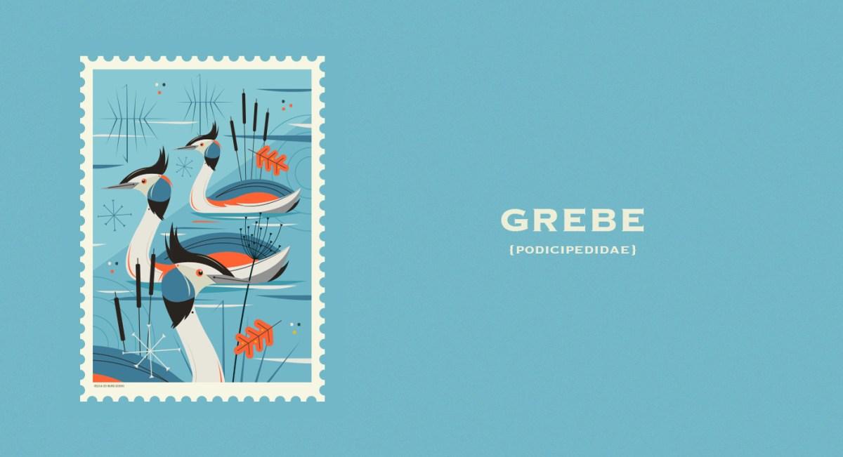 grebe1