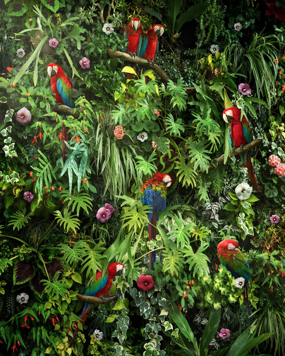 Gorgeous Tropical Scene Featuring Macaws