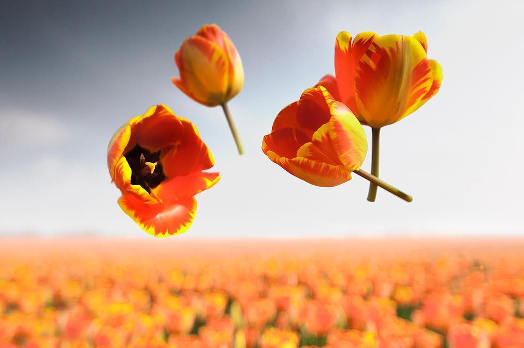flowers in flight