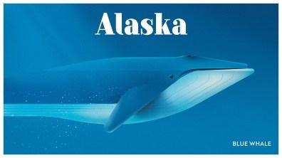 Endangered Animals Moss and Fog Alaska